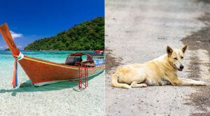 Rabies i Thailand